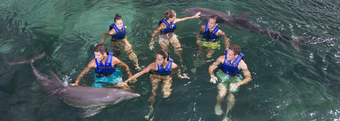 weekend-swimming-with-dolphins-in-cancun.png