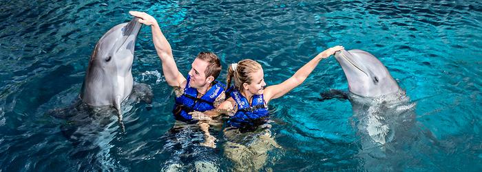 tips_para_nadar_con_delfines_-_nado_con_delfines.png